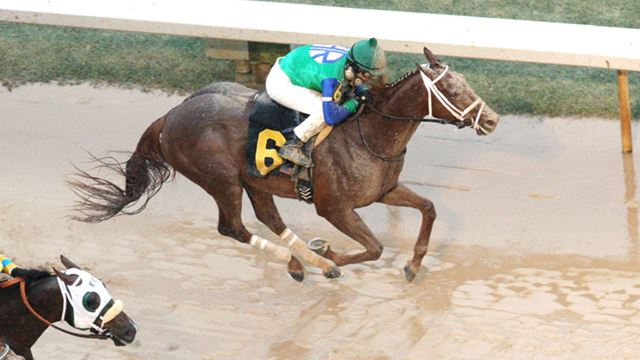 Route du Kentucky Derby/Kentucky oaks 2015 - Page 2 Far-Right-2015-Southwest-Stakes